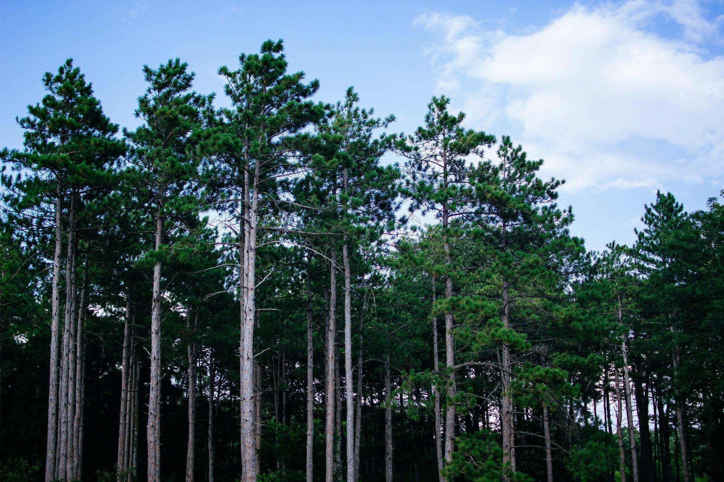 Arboretum trees.jpg