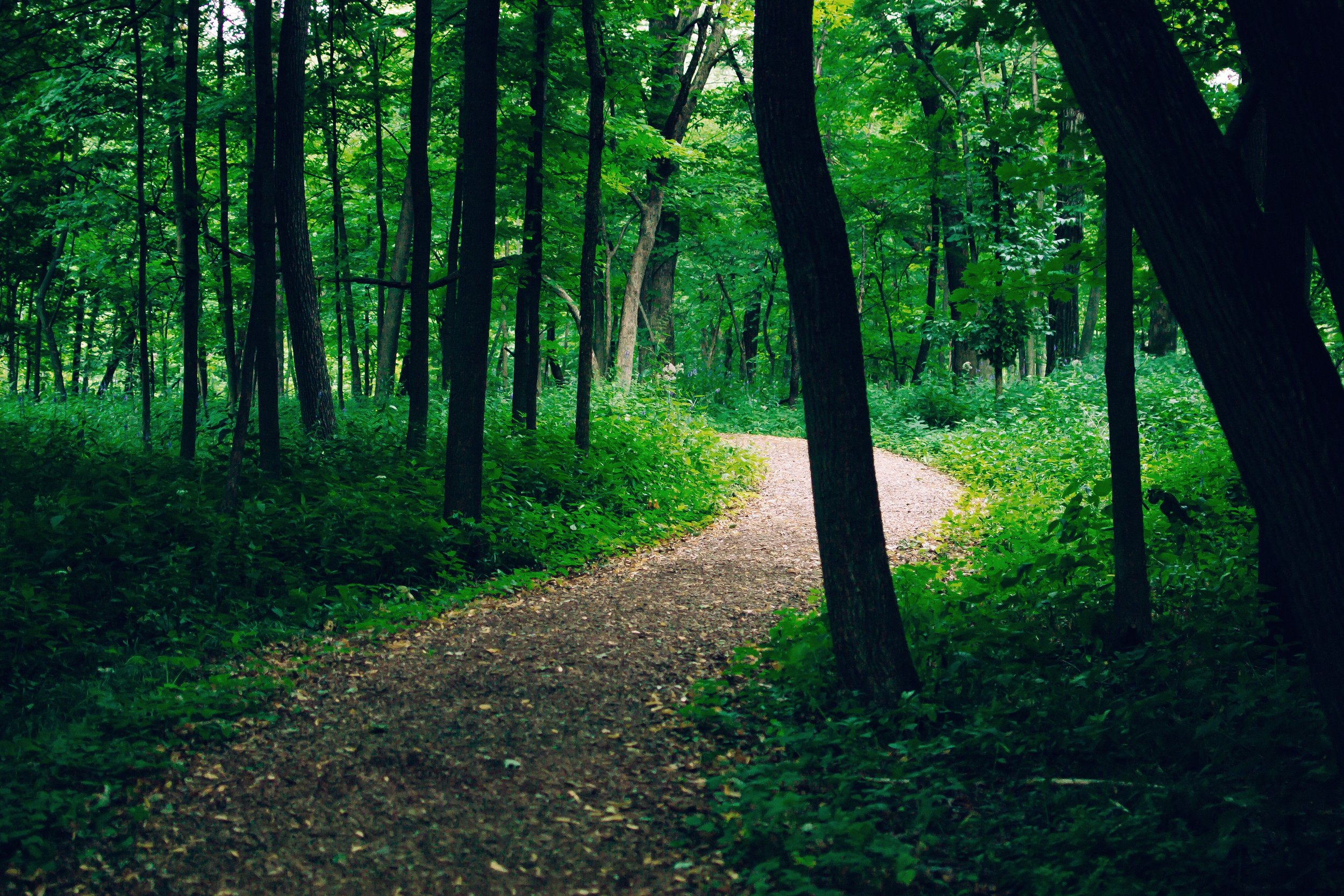 Winding through the Forest.jpg