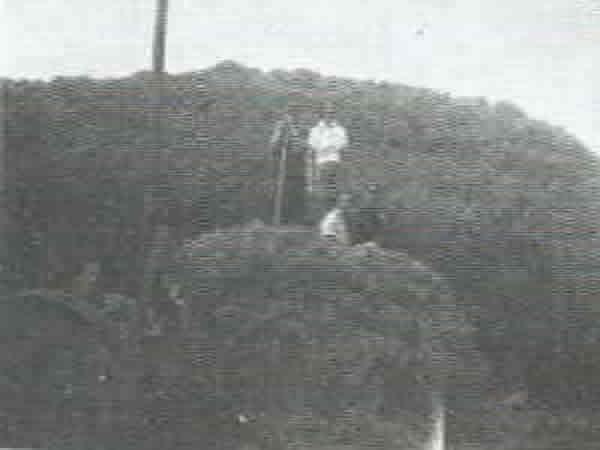 Hay Stacks - Haymaking at Hamiltons