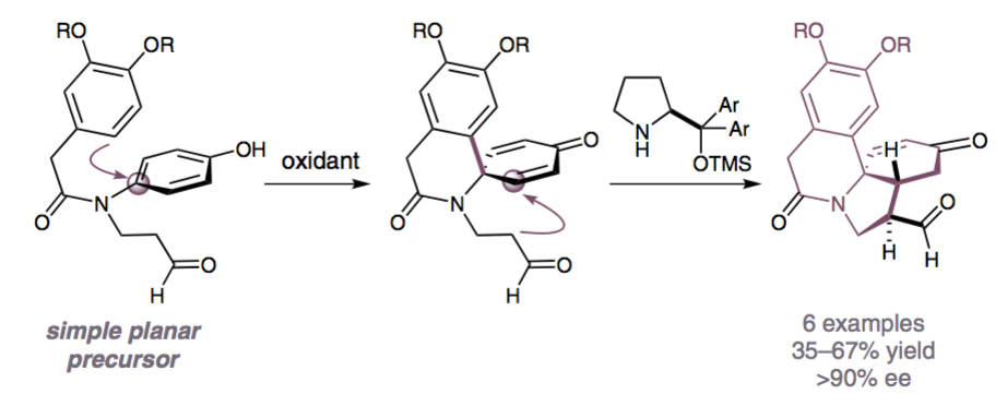 Rapid Generation of Complex Molecular Architectures by a Catalytic Enantioselective Dearomatization Strategy    A catalytic enantioselective dearomatization strategy can be used to convert readily assembled phenols into complex polycyclic ar- chitectures. By combining oxidative dearomatization of phenols bear- ing a pendent nucleophile with enantioselective secondary amine catal- ysis, high enantiomeric excesses were obtained for the natural product- like products.