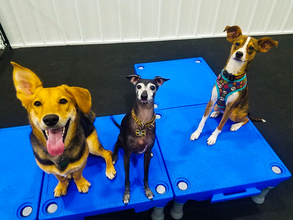 barks_&_recreation_Fargo_ND_Dog_Daycare_Enrichment_Klimb_sit_stay.jpg