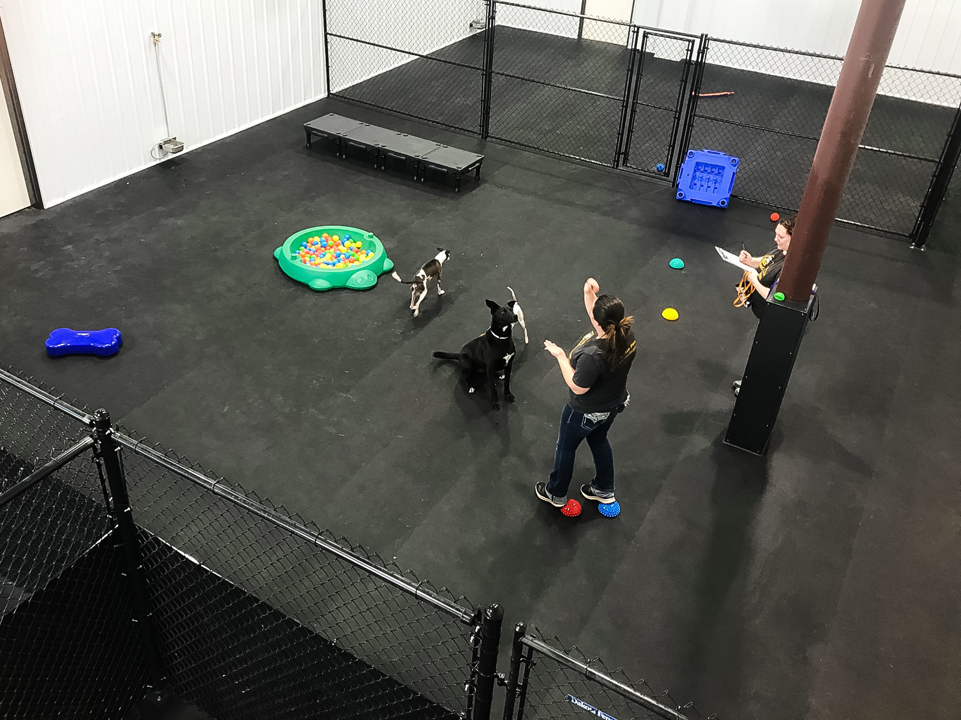 barks_&_recreation_Fargo_ND_Dog_Daycare_Enrichment_evaluation_temperament_testing.jpg