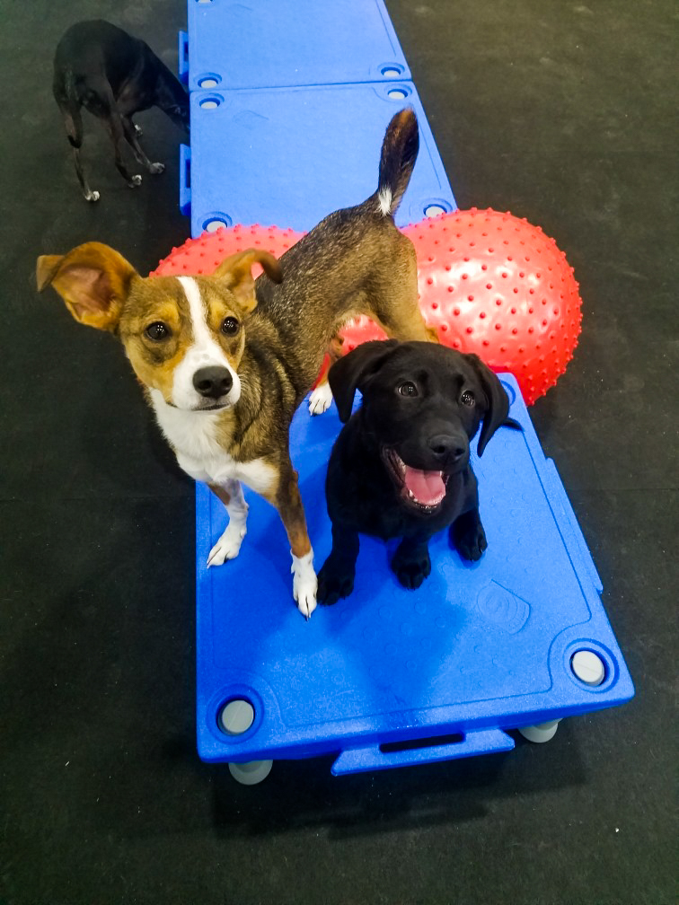 barks_&_recreation_Fargo_ND_Dog_Daycare_Enrichment_Klimbing.jpg