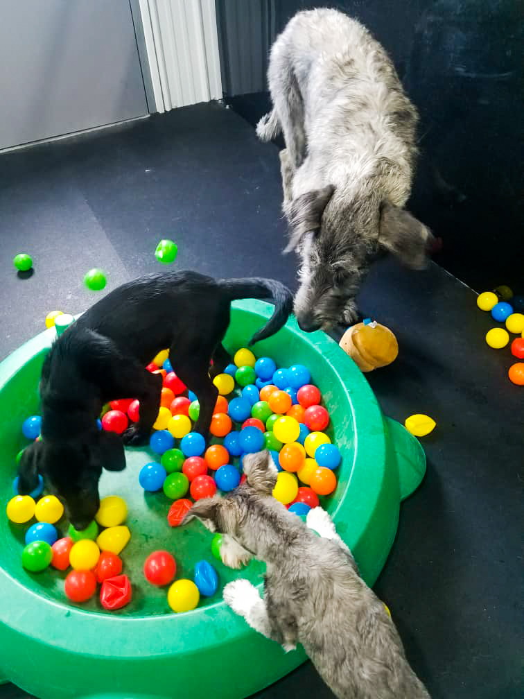 barks_&_recreation_Fargo_ND_Dog_Daycare_Enrichment_Ballpit.jpg