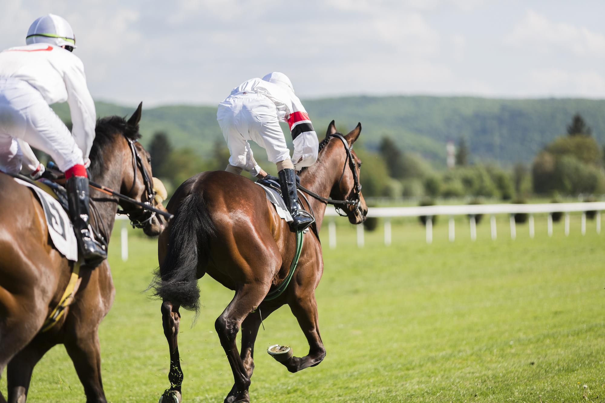 Malvernvale Horse Racing.jpg