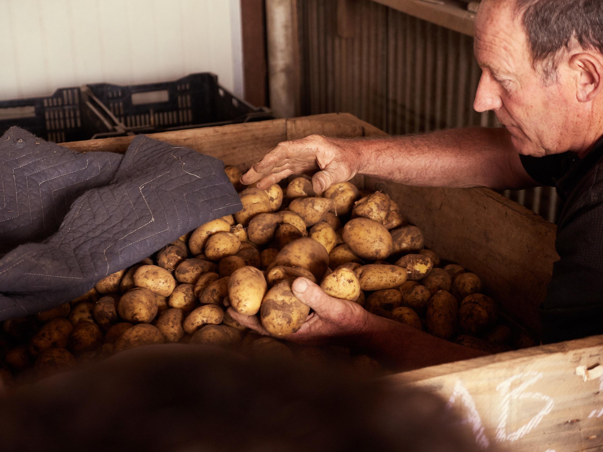 GORDON THE POTATO FARMER.