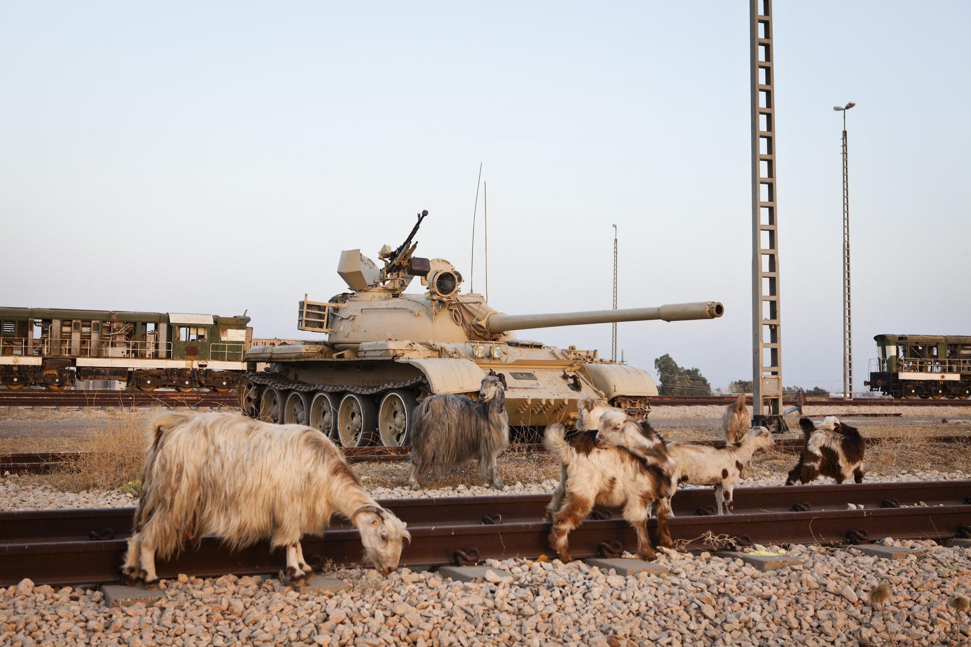 Goats roam a Peshmerga base.