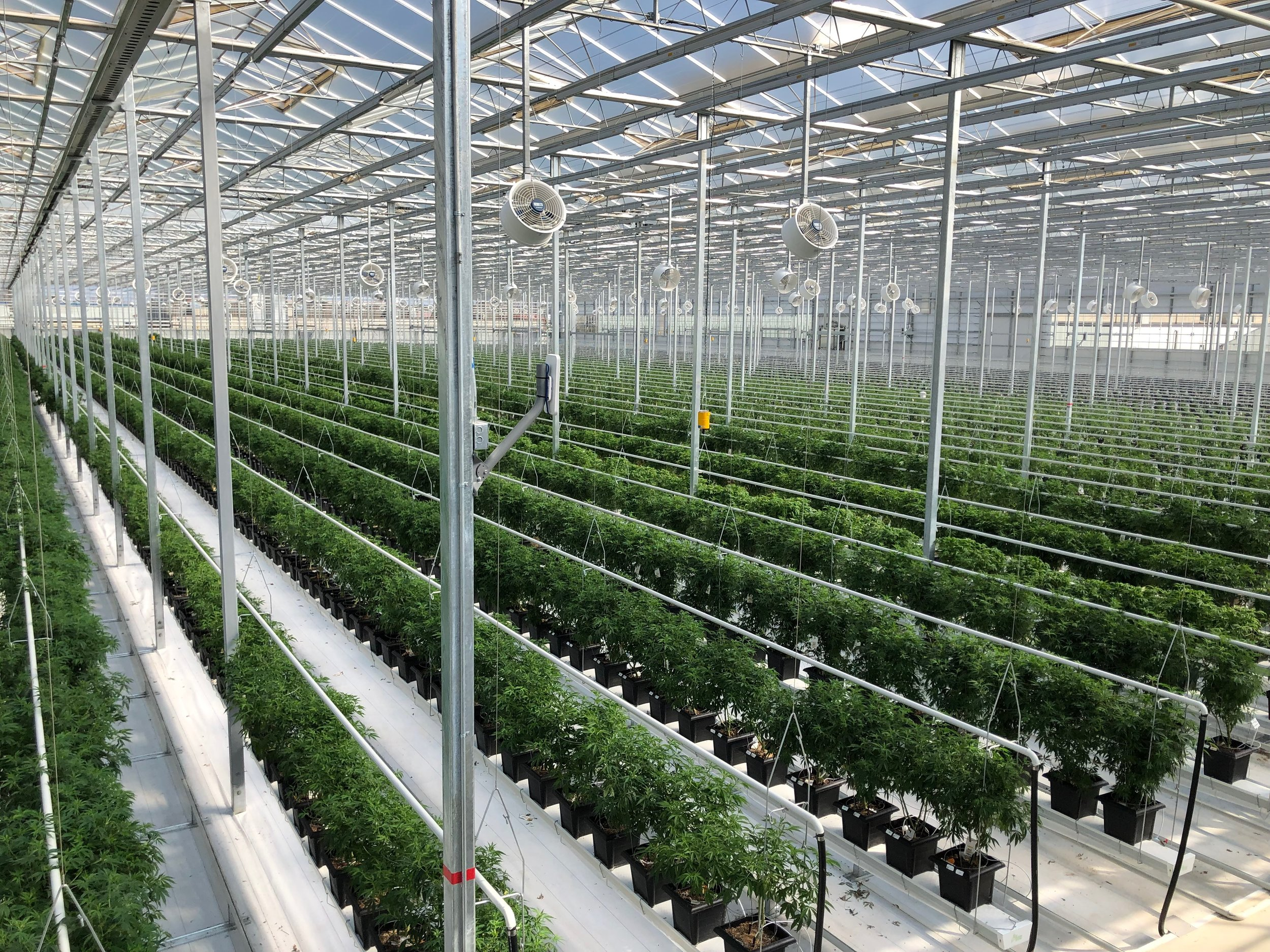 Aphria_Greenhouse (2).jpeg