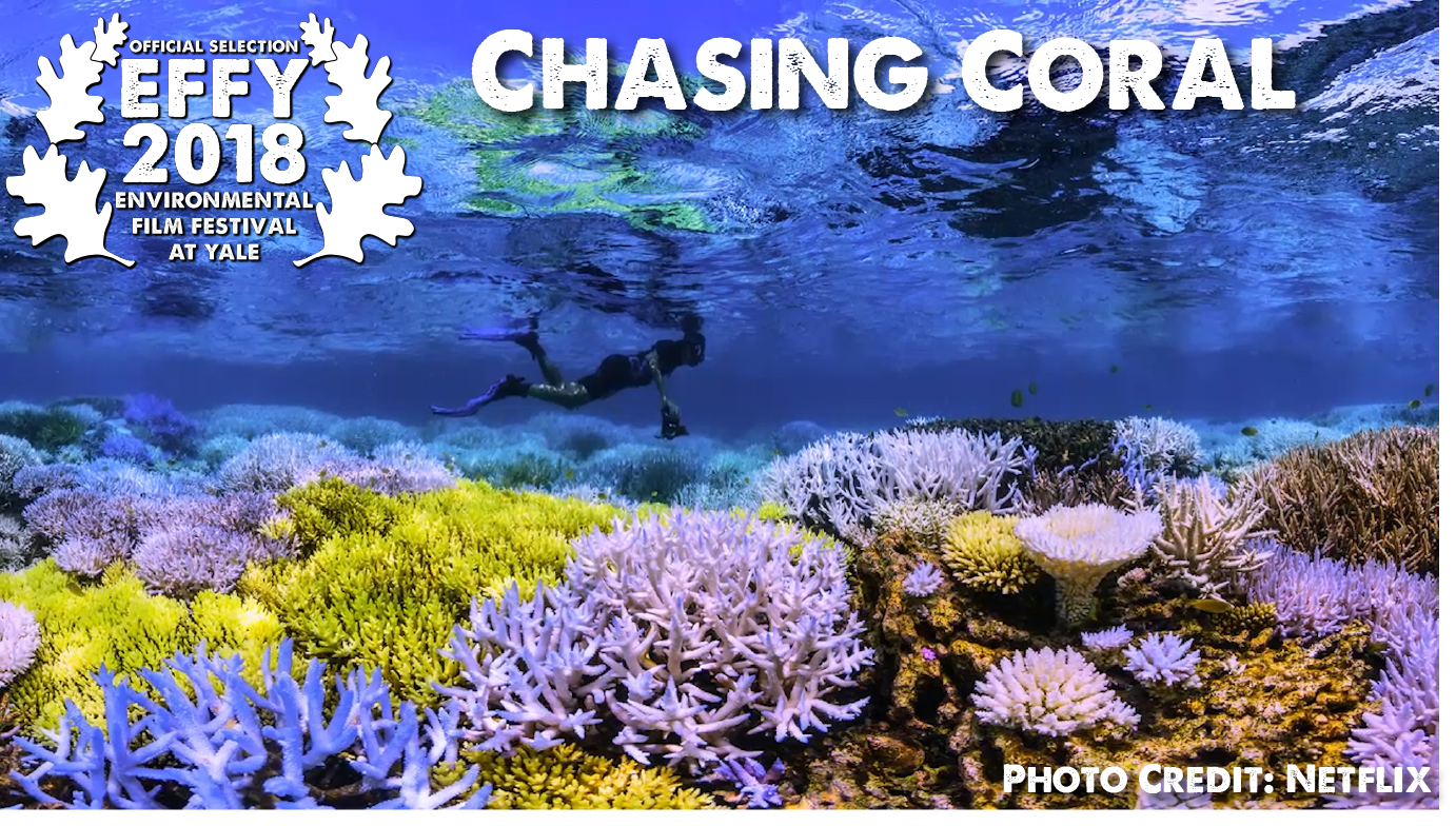 Chasing Coral Selection.png