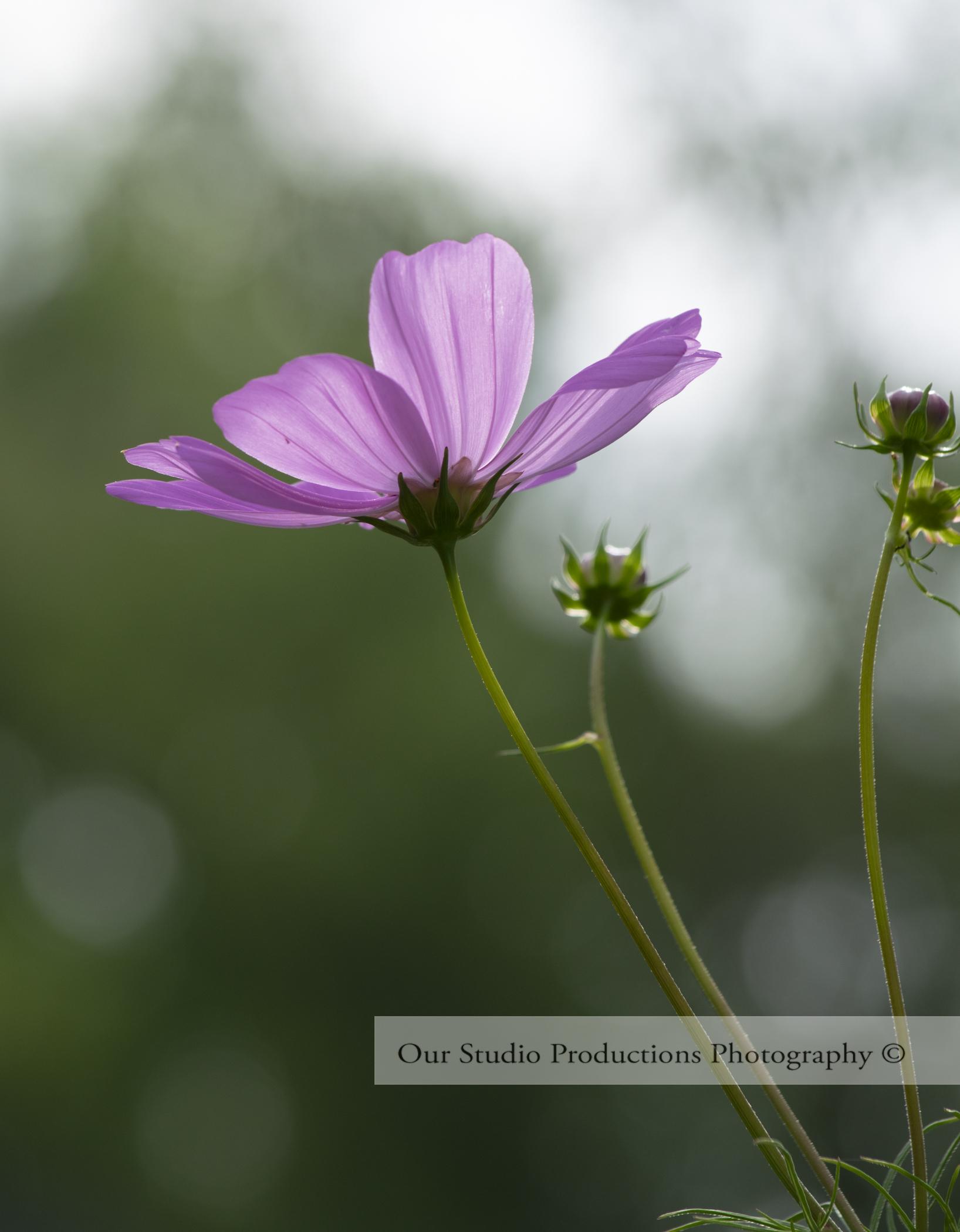 Wild Flowers_OSP_Flowers.jpg