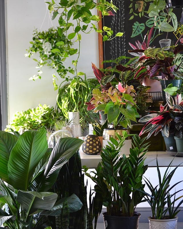 It's been a while since we posted! Remember these lush views?😍New indoor plants are arriving today, so we'll be able to gaze upon a green shop once more🌿We've been busy getting ready for spring🦋As of this week we have new perennials, trees, & shrubs!😱Who knew spring would be here so soon?! It's going to be a beeeautiful weekend and our new spring hours mean we're open 7 days a week!🌞 Saturday 9-5 Sunday 12-4 & Monday 10-6 💚see you soon!💚