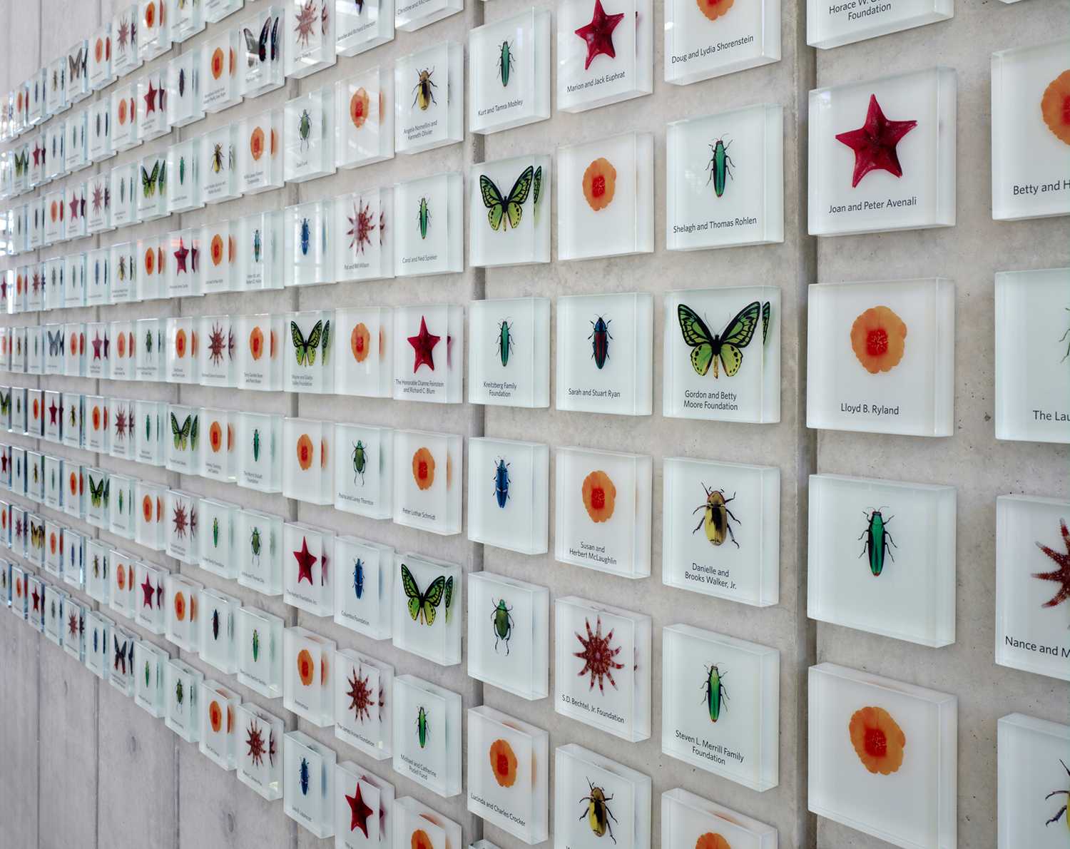The donor wall was created as a stylized specimen drawer, complete with botanical and insect replicas whose rarity indicated the donor level.
