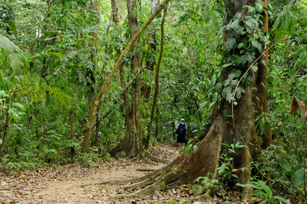 corcovado-national-park-day-tour-costa-rica.jpg