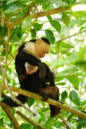 Encanta-La-Vida-monkey.jpg