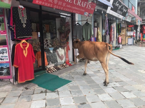Nepal 3.jpg