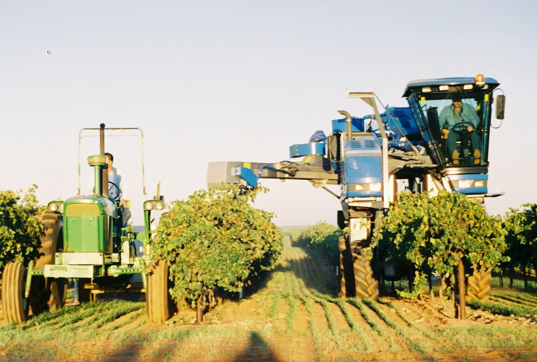 Newsin Vineyards machine harvesting.jpg