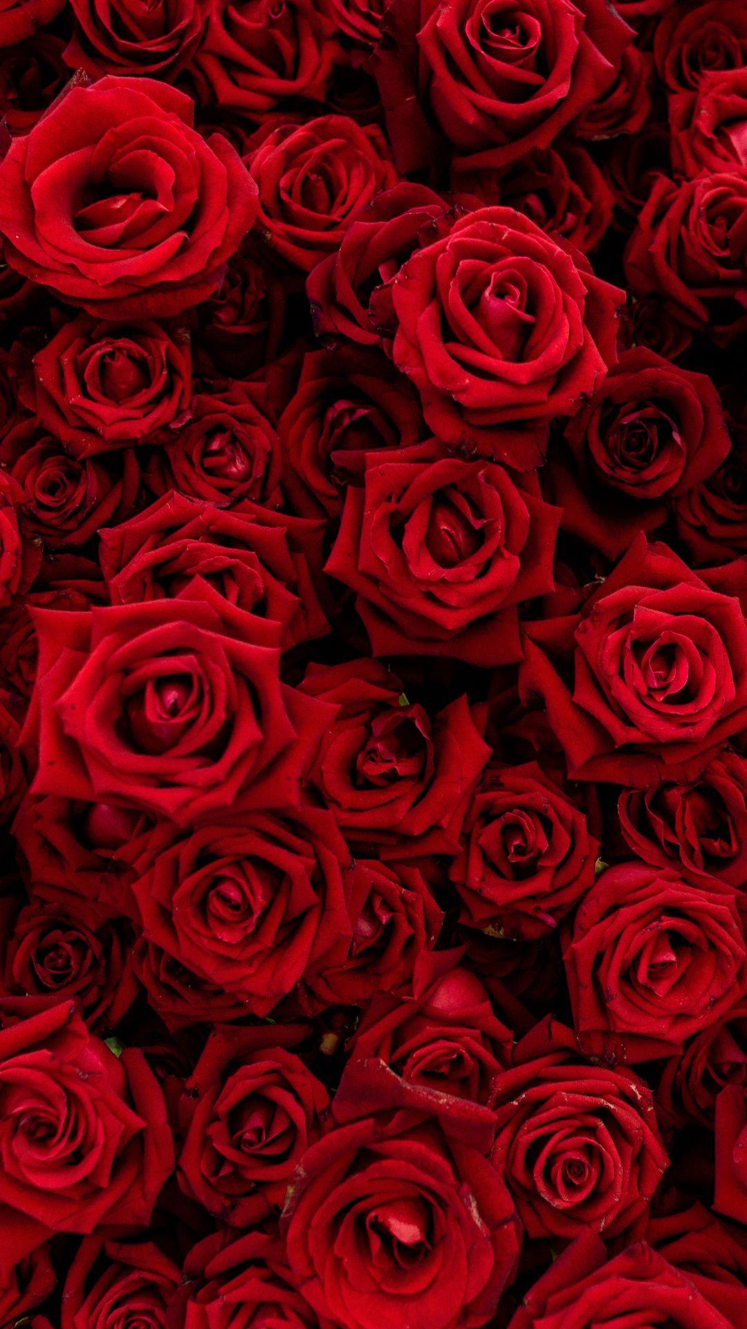 roses 2.jpg