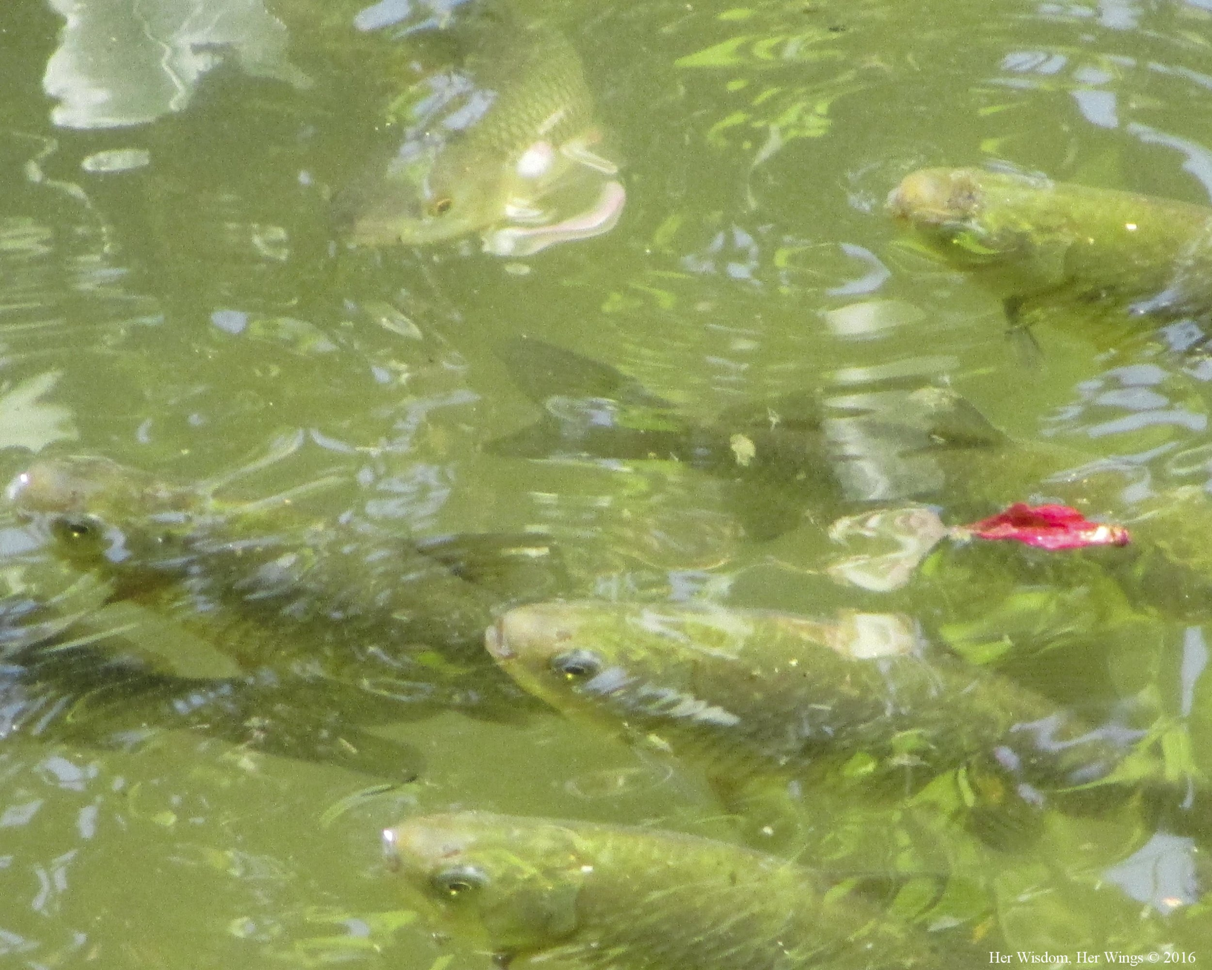 My Fish, My Peace