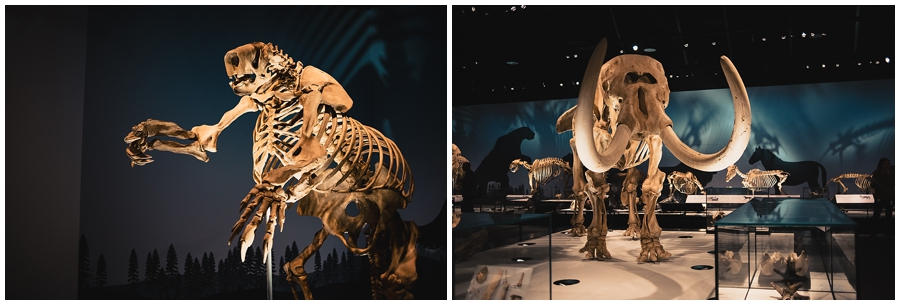 Natural History Hall, Royal Alberta Museum