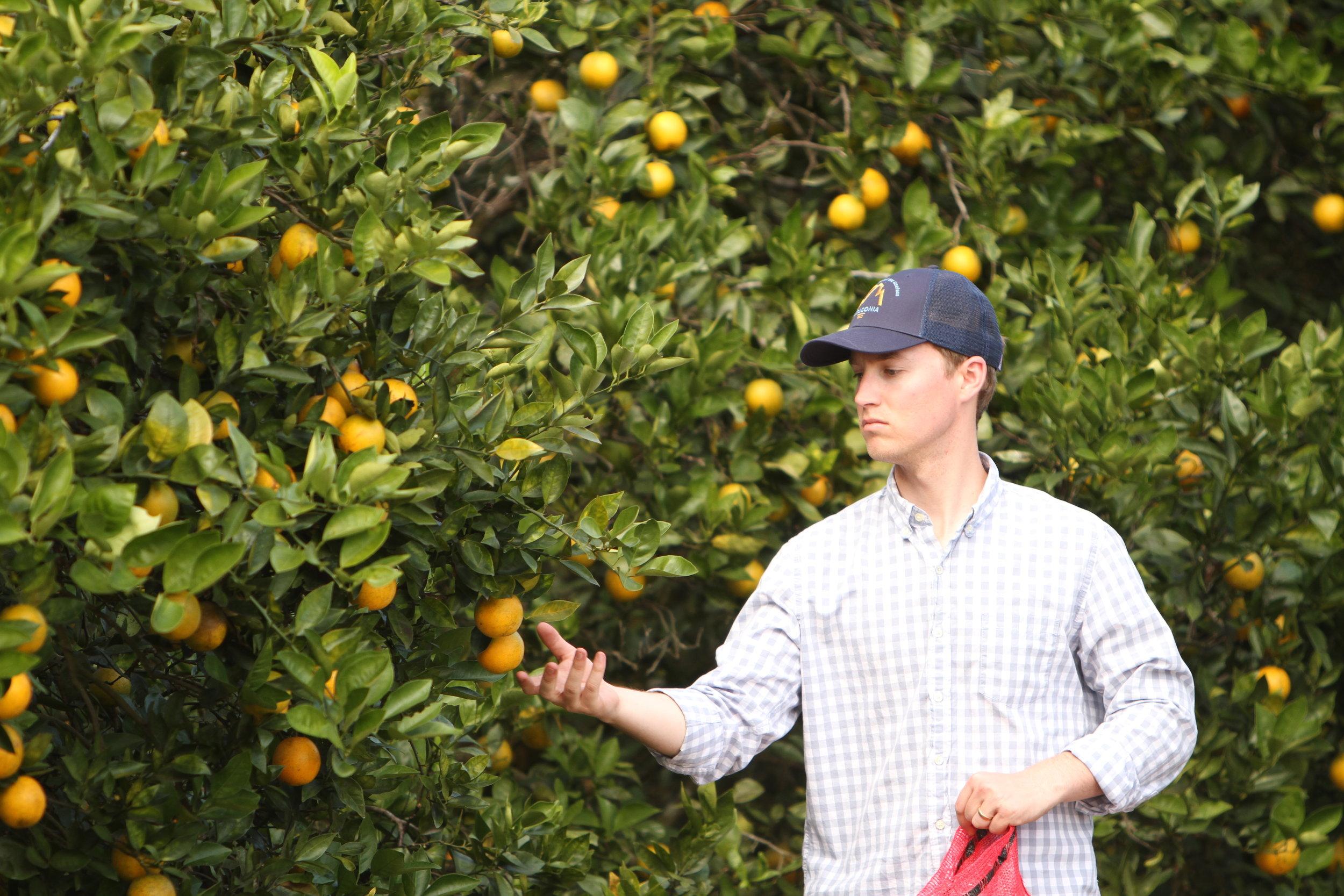Ben in grove 11.JPG