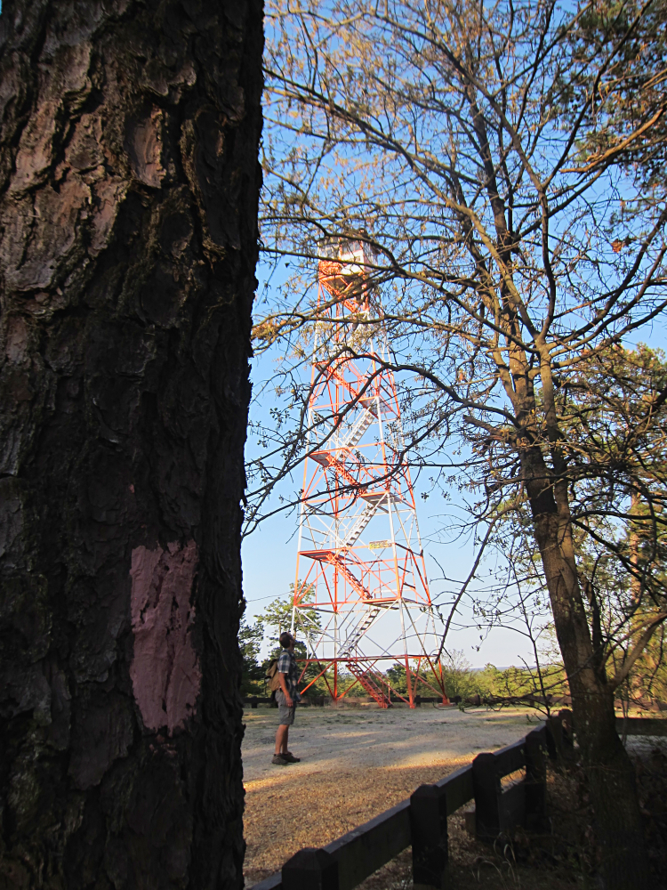 Apple Pie Hill Tower, tree with pink blaze of the Batona trail
