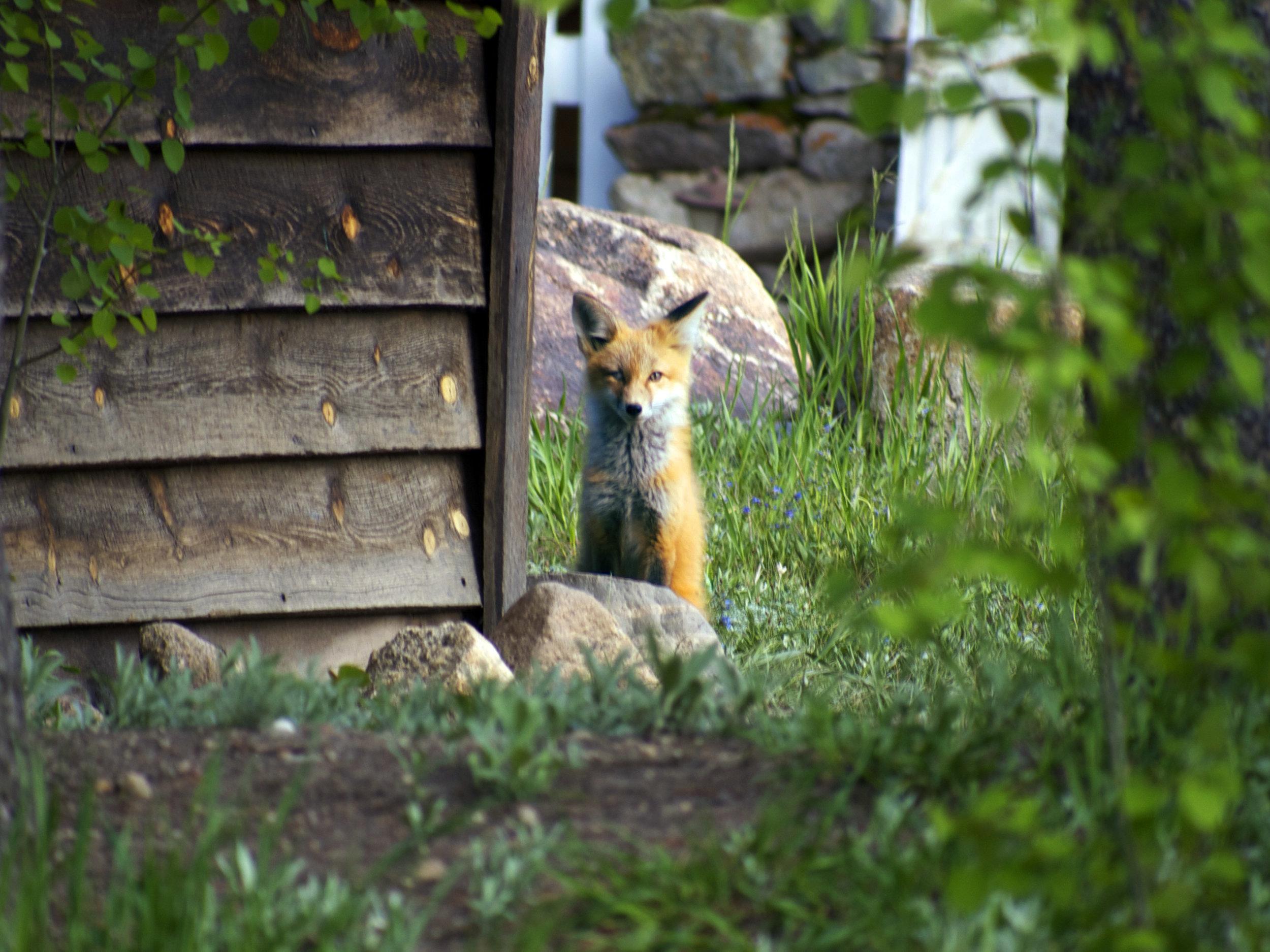 Fox, Nederland, Co - Photo by Tim Giller