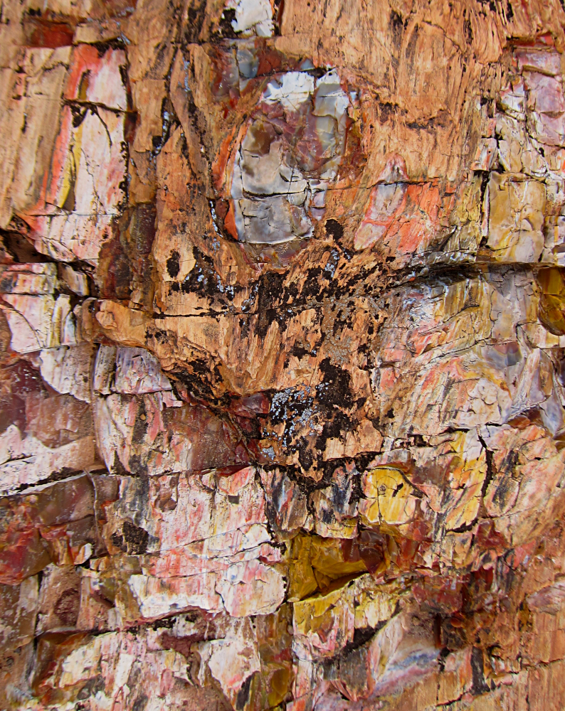 Petrified Wood - Escalante Petrified Forest State Park