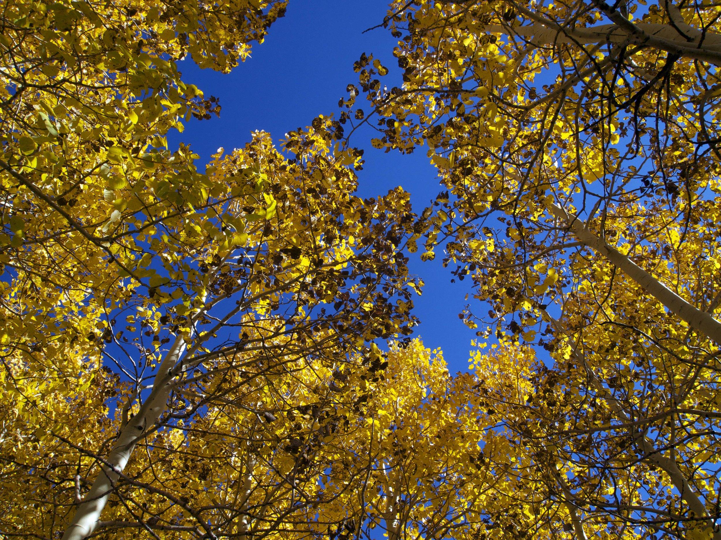 Aspens, Utah - Photo by Tim Giller