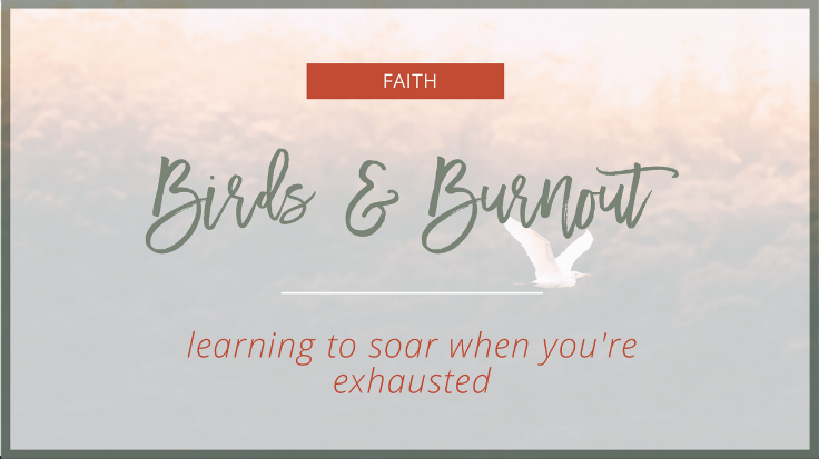 Birds and Burnout: learning to soar when you're exhausted  |  The Social Walker