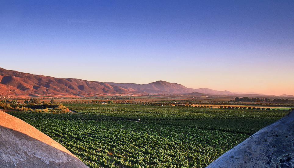 Image from  Monte Xanic Winery