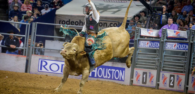 Bull Riding  Image source