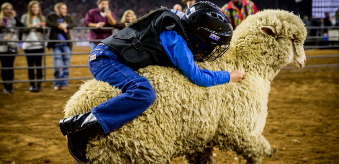 Mutton Bustin  Image source