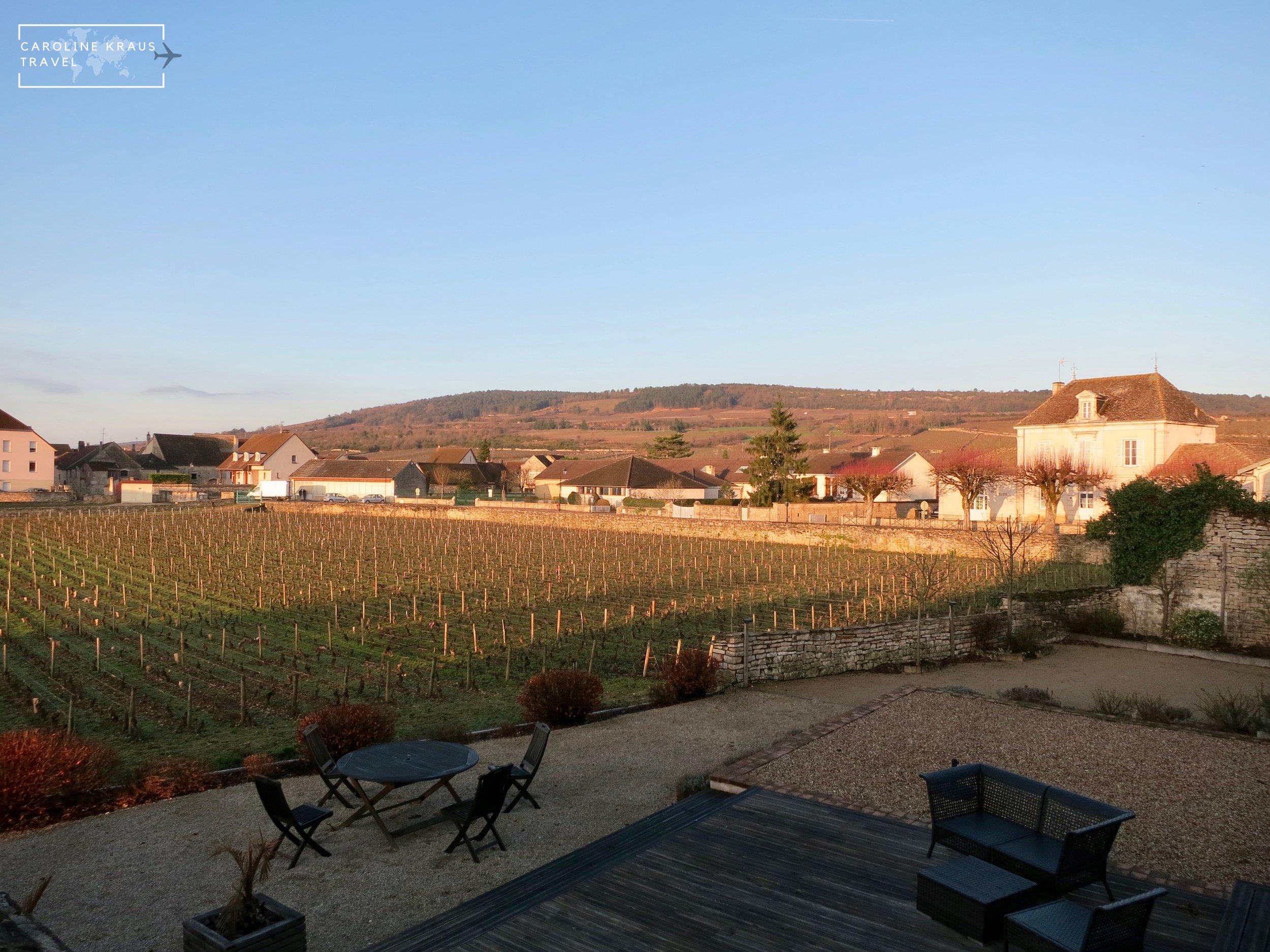 Morning light on the backyard vineyard