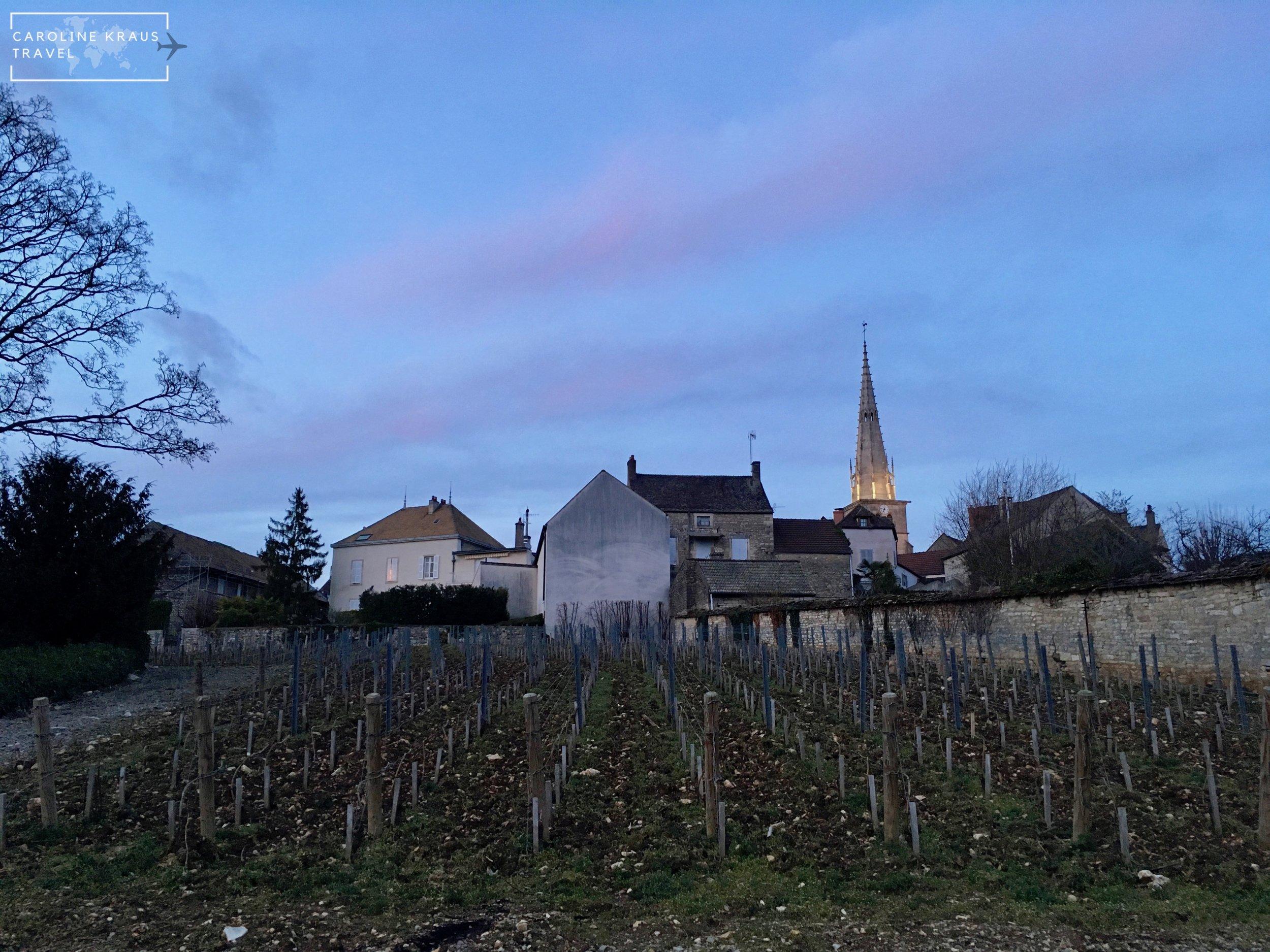 The other backyard vineyard at dusk