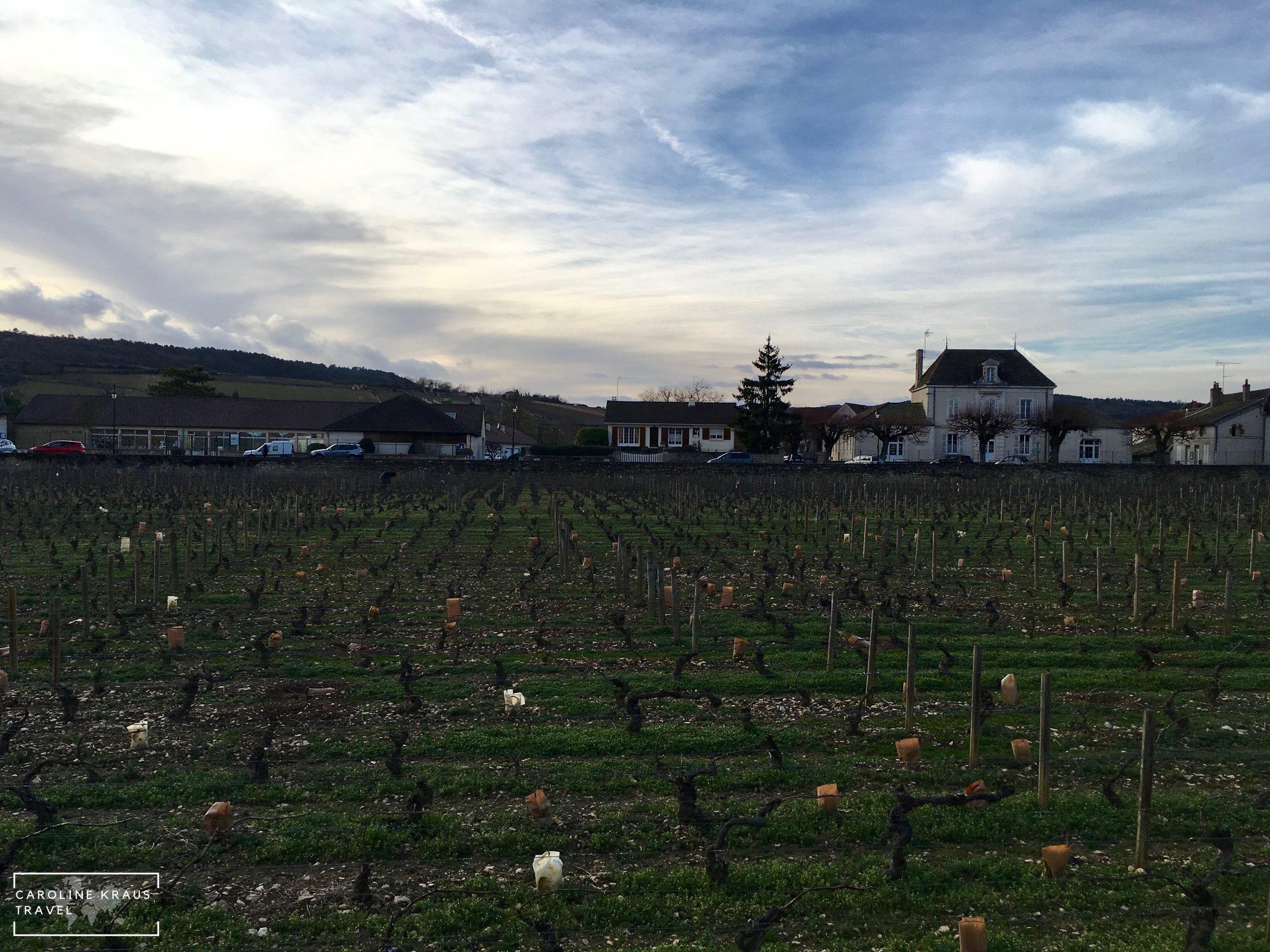 Vineyards in Meursault