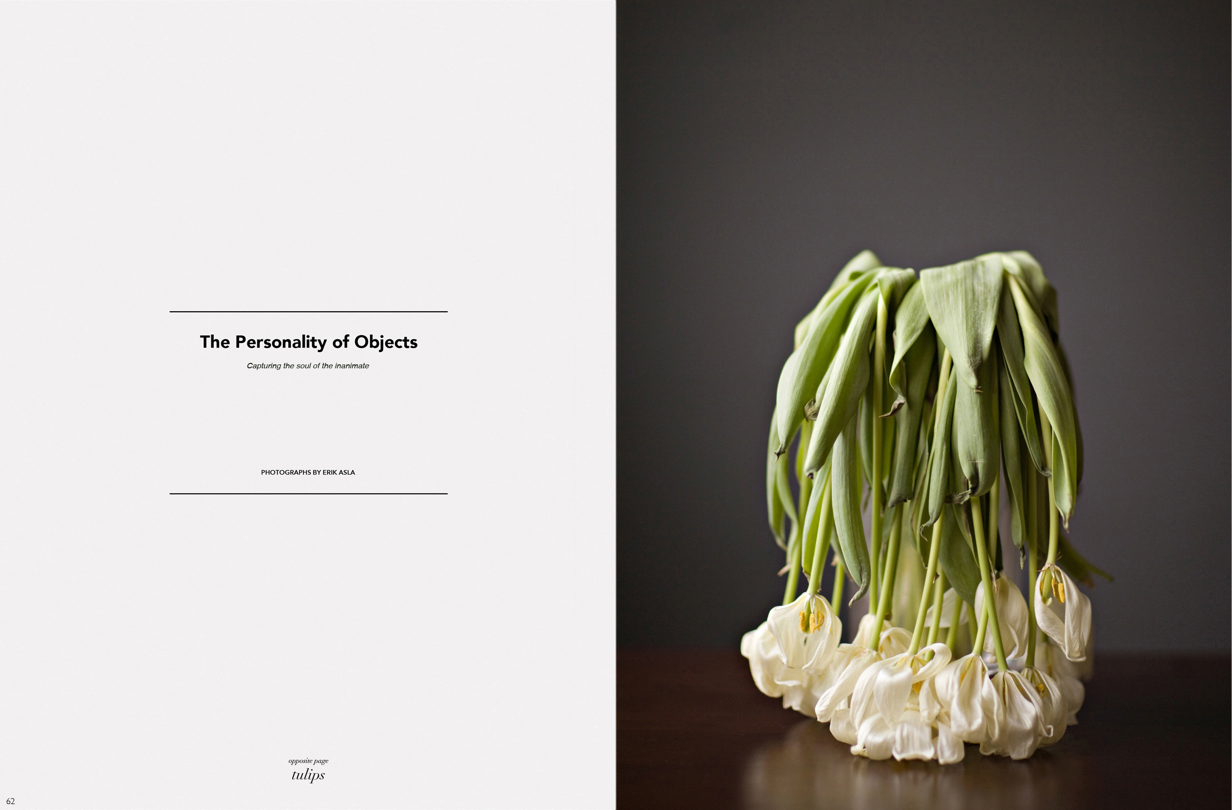tulips_opening_page.jpg