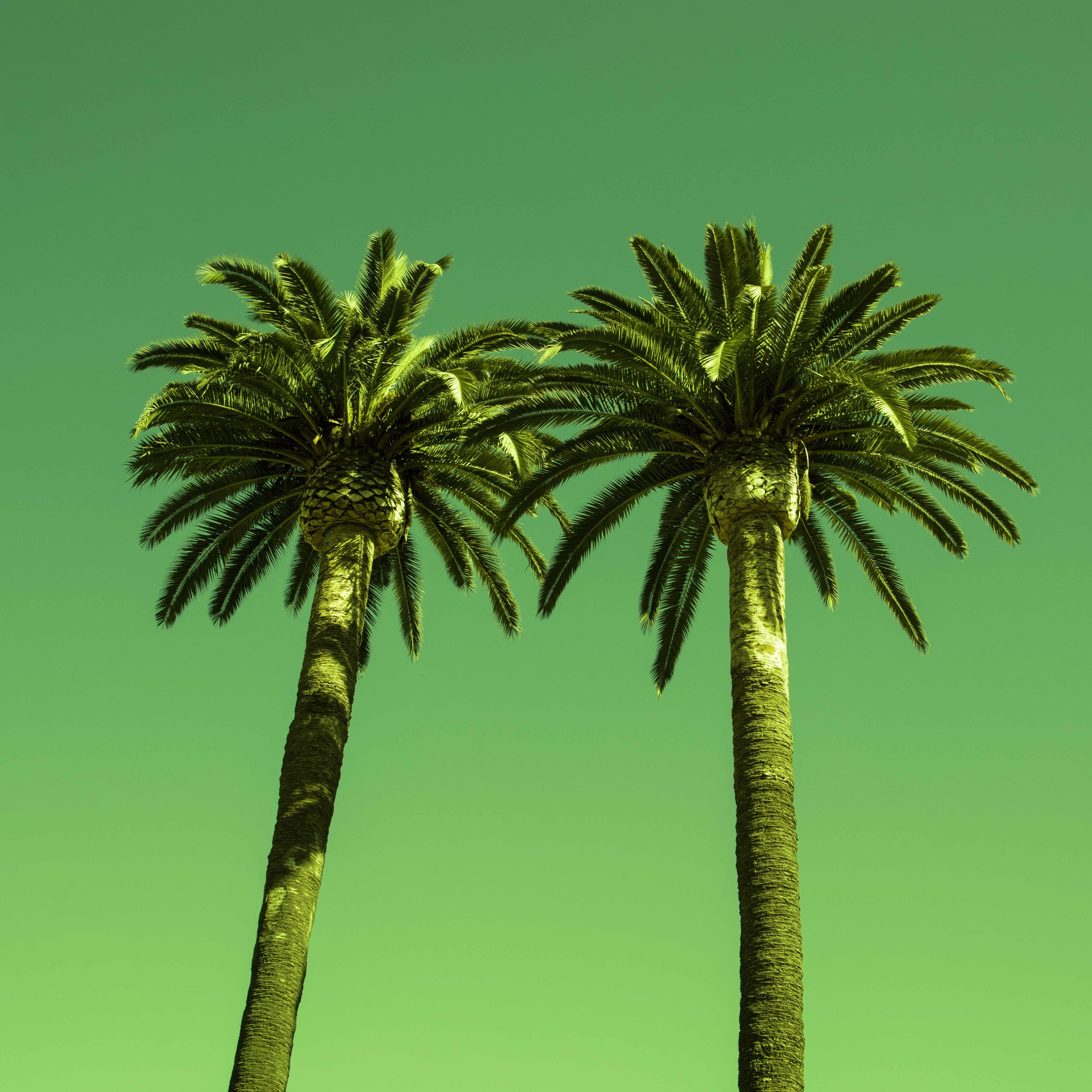 PALM_TREES-5838_V2.jpg