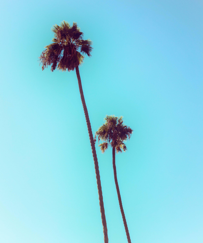 PALM_TREES-5844_V2.jpg