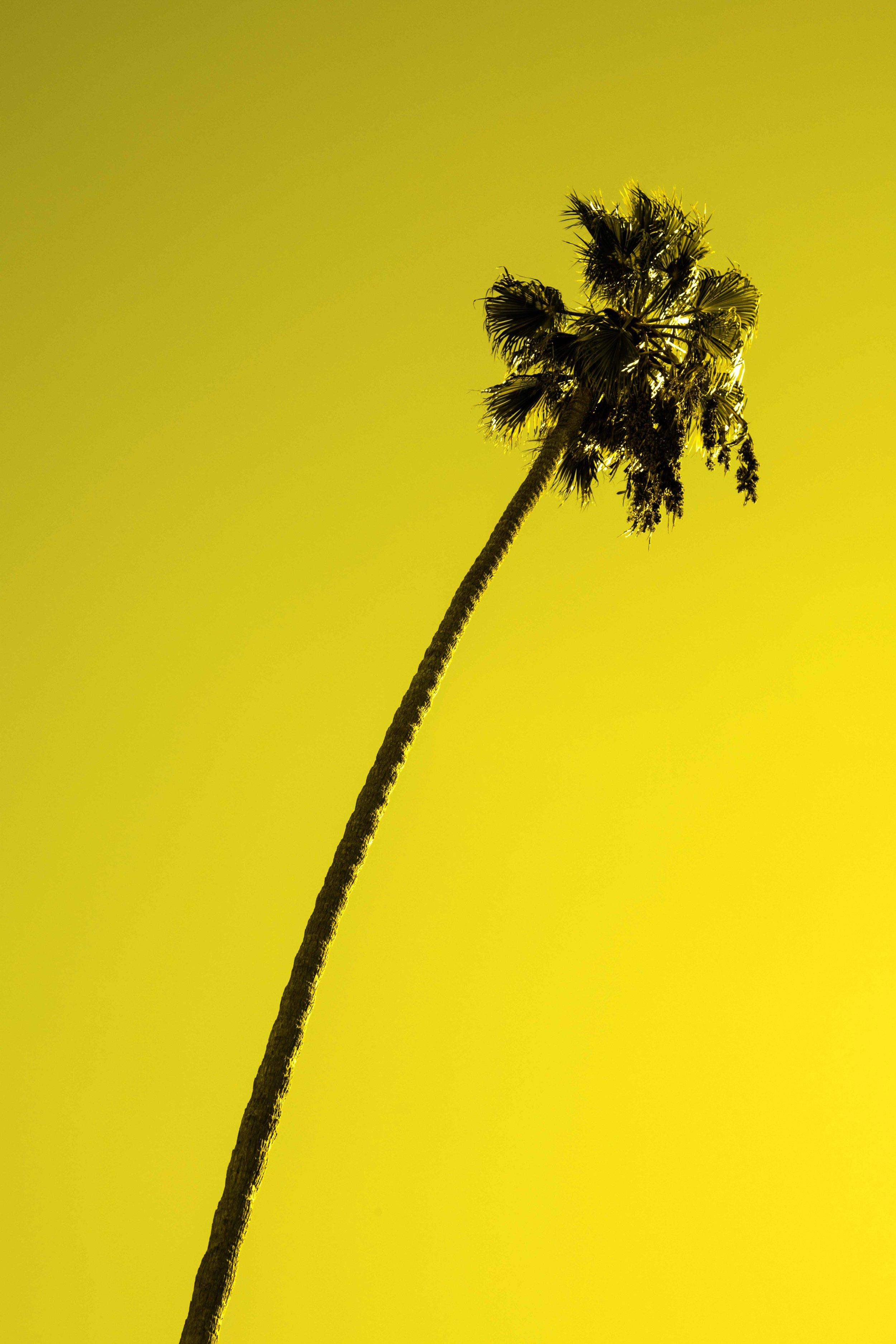 PALM_TREES-5846_V2.jpg