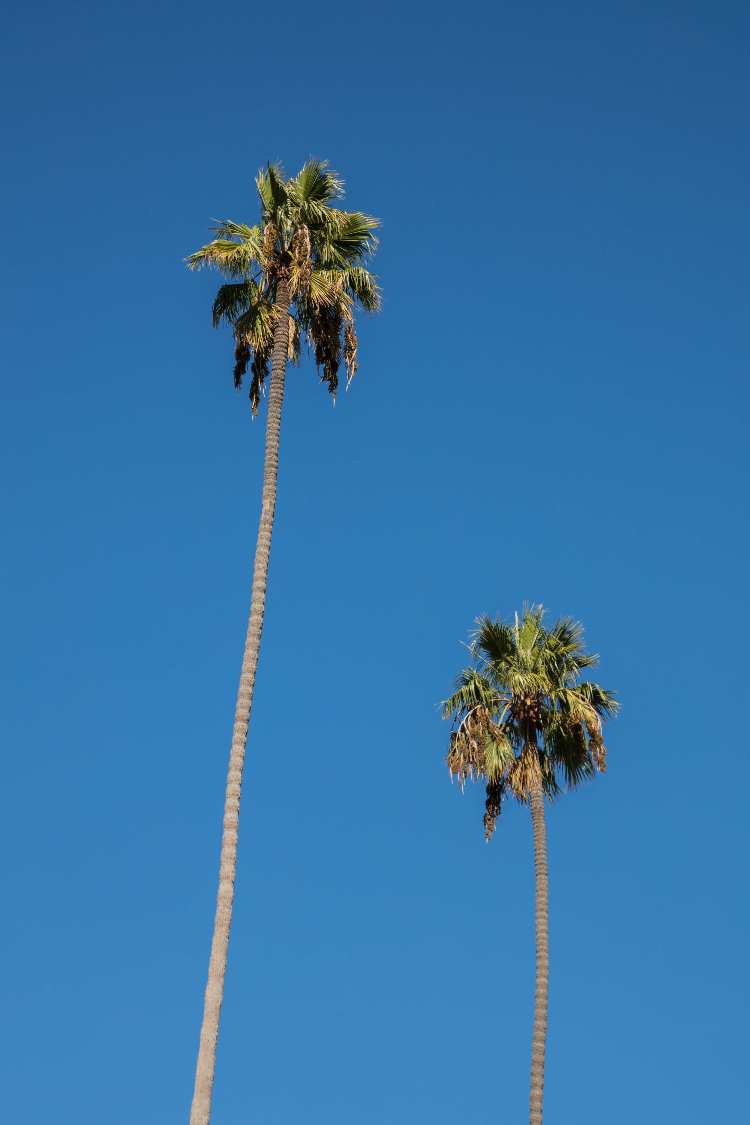 PALM_TREES-5847.jpg
