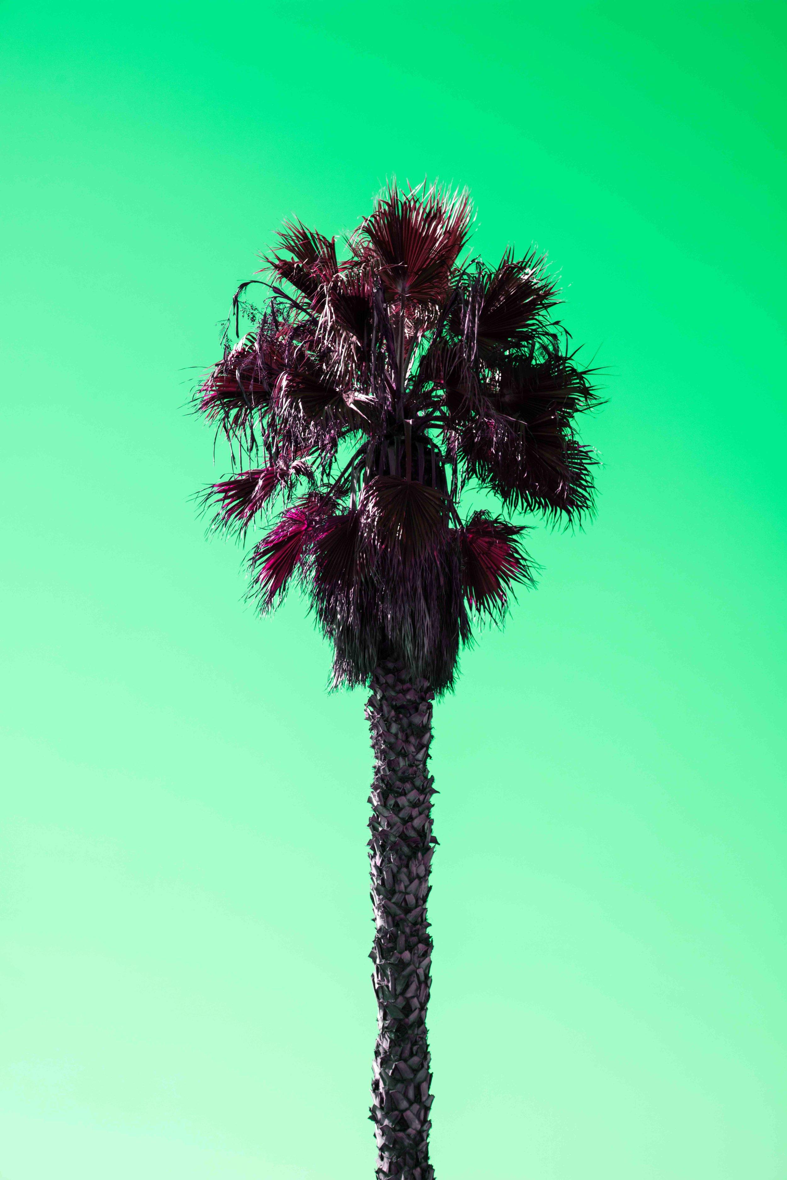 PALM_TREES-5851_V2.jpg