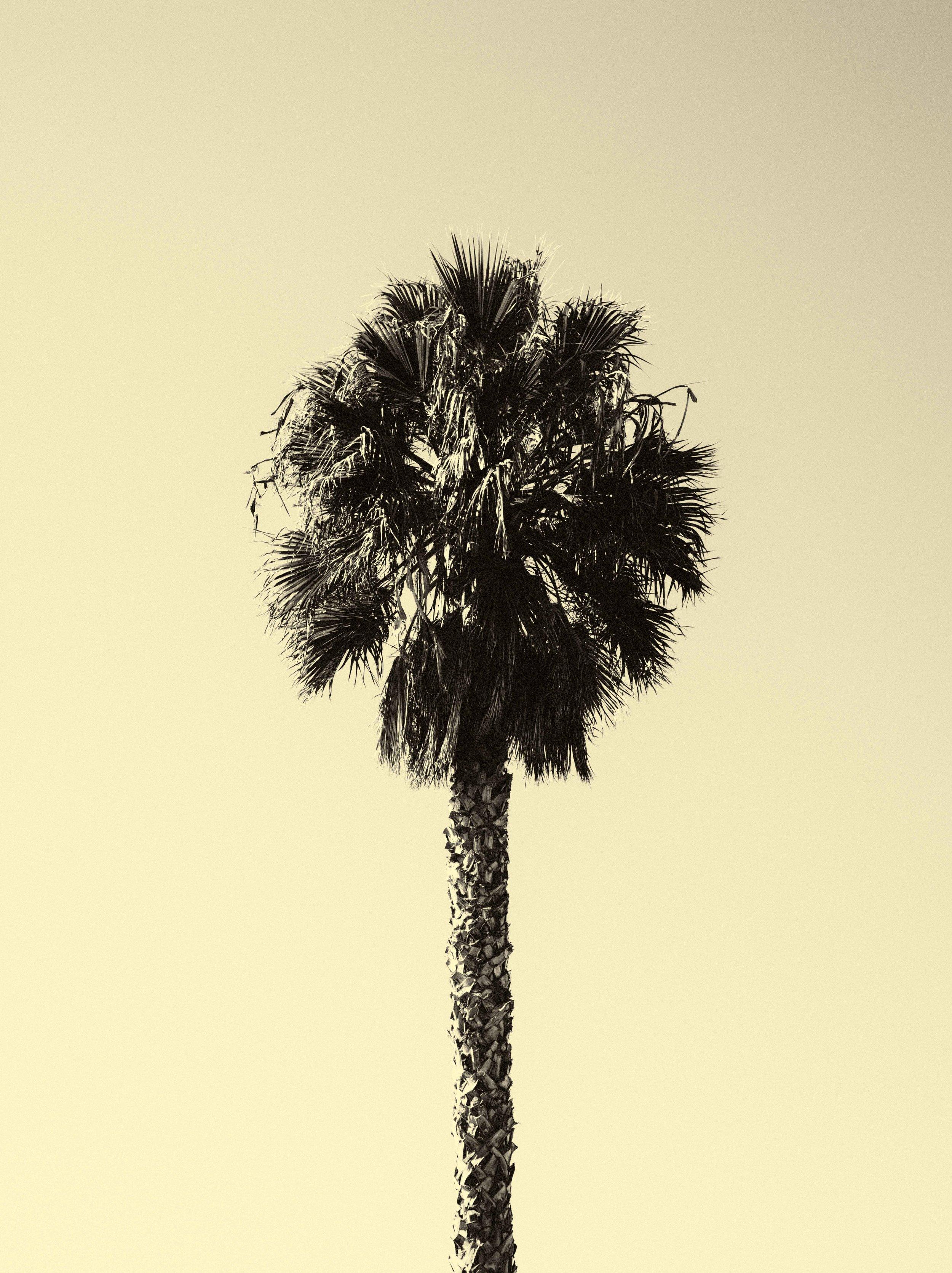 PALM_TREES-5852_V2.jpg
