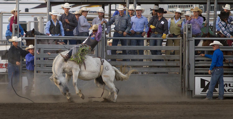 rodeo_chutewide.jpg