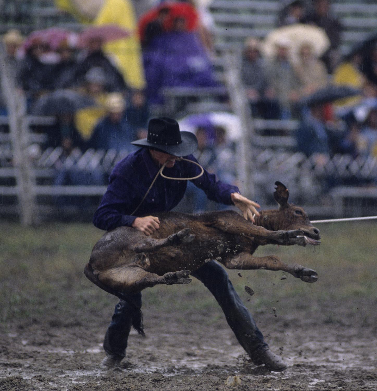 calf.jpg