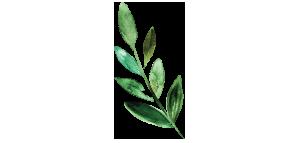 ODC_Leaf.png