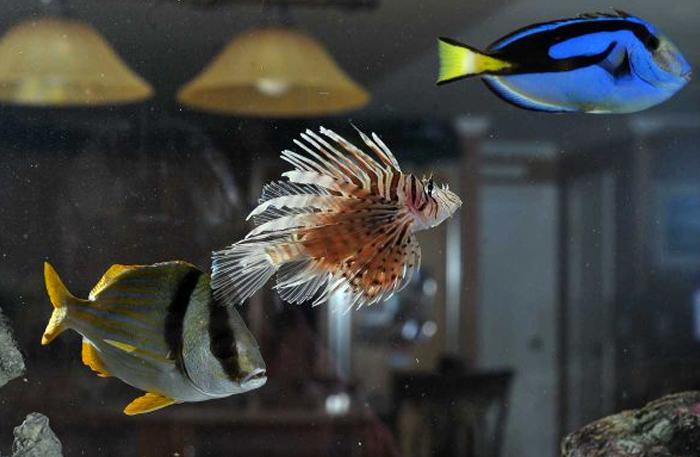 Aquariums That Fill Up a Room   Newsday