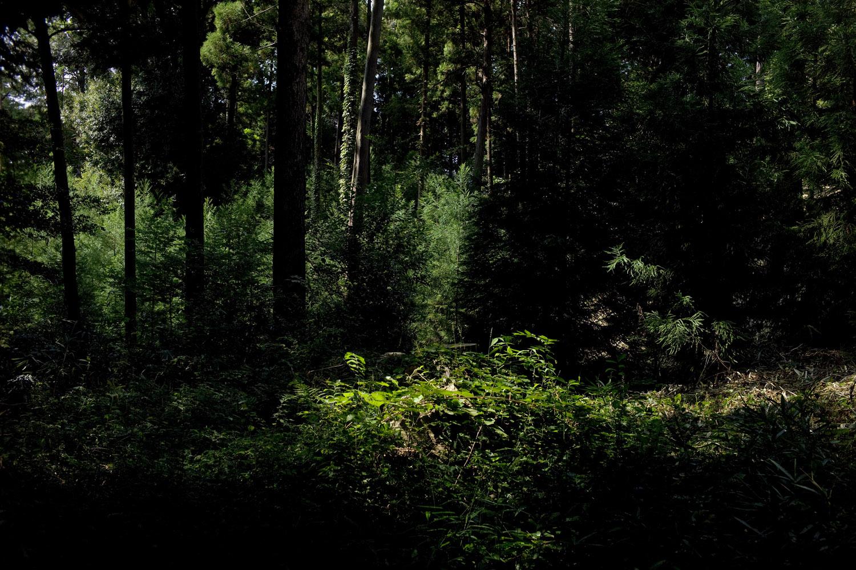 Munro_japan_003.jpg