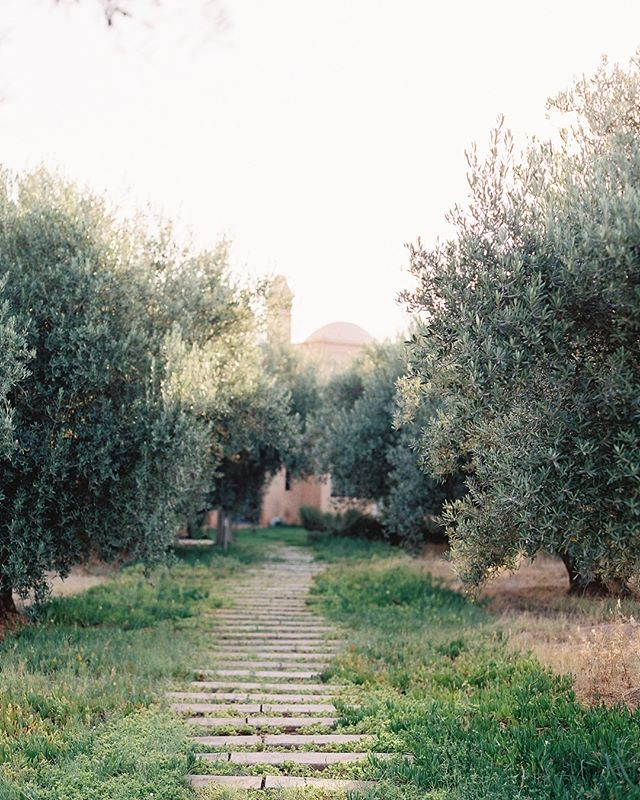 Marrakesh olive grove. #film