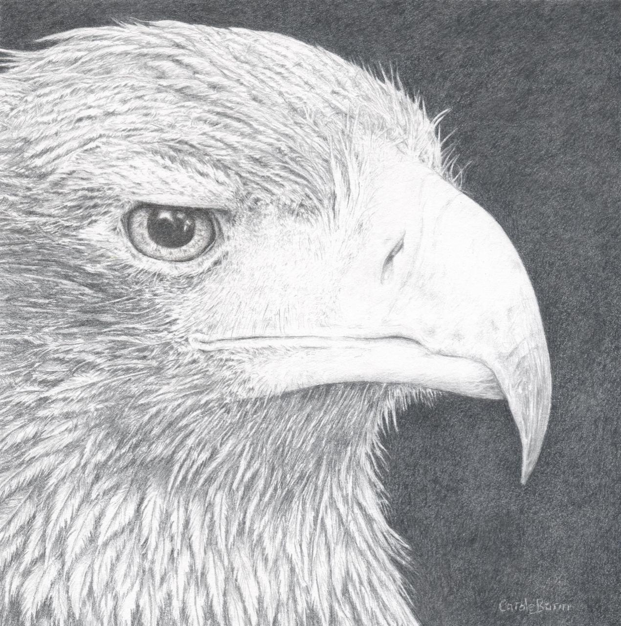 Carole Bann, Eagle, 2015, 24ct gold and silver, 20.5x38cm.jpg