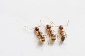 ants-498731_640.jpg